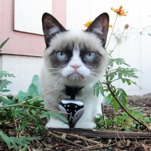 DOGTEK Eyenimal Cat Video Camera with Night Vision22