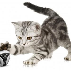 DOGTEK Eyenimal Cat Video Camera with Night Vision1