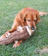Chipmunks Squeaky Hide and Seek Plush Dog Toy3